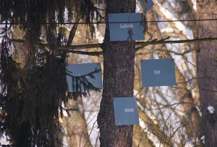 [drzewo w Muzeum Gombrowicza, fot. Tadeusz Bielawski]